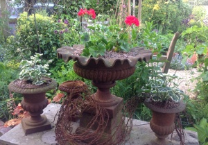 Geraniums and my lovely rusty urns.